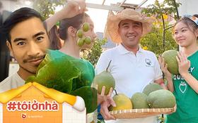 Loạt sao Vbiz hoá bác nông dân tự trồng trọt và chăn nuôi mùa dịch: Choáng nhất là khu vườn trong biệt thự 21 tỷ của Quyền Linh!