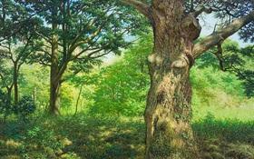 Hình ảnh cánh rừng xanh ngát xanh đem lại cảm giác yên bình khó tả nhưng ẩn chứa đằng sau đó là sự thật khó tin