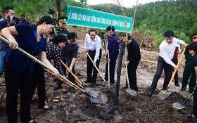 103 cây hoa ban Điện Biên về bên mộ Đại tướng