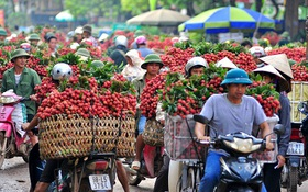 Chùm ảnh: Chợ vải thiều Lục Ngạn một màu đỏ rực kéo dài hơn 10km