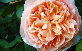 """Sự thực về cái giá đắt đỏ của những bông hoa """"trăm triệu"""""""