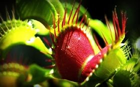 Vẻ đẹp chết người của những loài thực vật ăn thịt