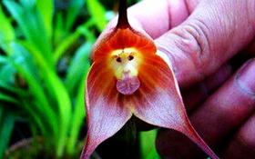 Các loài thực vật có hình dáng từ hài hước đến đáng sợ