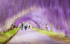 """Ngắm các vườn hoa """"tràn ngập tình yêu"""" vòng quanh thế giới"""