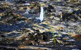 Phân tích nguyên nhân hành khách tử vong trong thảm họa MH17