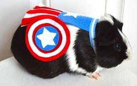 Bộ ảnh họ nhà chuột hóa thành siêu anh hùng nhân dịp Halloween