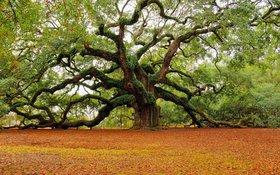 """Những loài cây nổi tiếng quý giá nằm """"lù lù"""" bên vệ đường"""