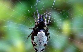 Phát hiện cơ chế ong bắp cày biến nhện thành Zombie