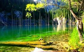 """Thăm 6 khu rừng """"bồng bềnh"""" trên mặt nước"""