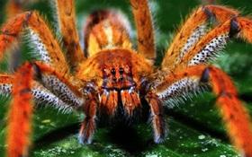 Những loài động vật nhỏ bé nhưng nguy hiểm nhất thế giới