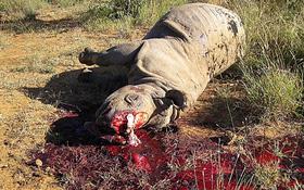 """Thực trạng săn bắt động vật quý hiếm """"gây kinh hãi"""" trên thế giới"""