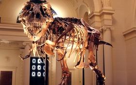Thế giới ngầm của giới buôn bán hóa thạch động vật tiền sử