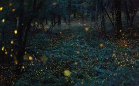 """Ngắm thiên nhiên Nhật Bản qua hình ảnh """"lóe sáng"""""""