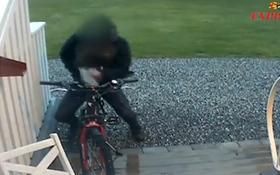 """Bắt gặp người đàn ông """"tình tứ"""" với... chiếc xe đạp"""