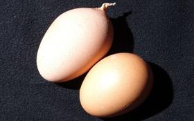 Quả trứng mọc đuôi xoắn, dài 3cm kỳ quái