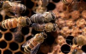 Ly kỳ chuyện bầy ong kéo đàn tới dự tang lễ chủ nhân