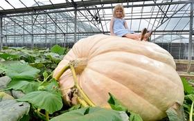 """""""Quái vật"""" bí ngô khổng lồ nặng 730kg"""