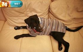 May áo cho cún cưng từ áo cũ của bạn