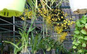 """Nhiều loại hoa có tên """"siêu lạ"""" xuống phố Sài Gòn vào dịp Tết Ất Mùi"""
