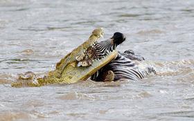 Du khách hoảng loạn khi chứng kiến cá sấu ăn thịt 1 người đàn ông