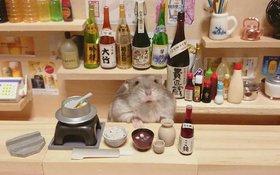 Tham quan quán bar siêu ngộ nghĩnh của những chú chuột Hamster đáng yêu