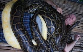 Du khách thích thú với trị liệu mát-xa bằng 4 con trăn khổng lồ dài 5m