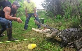 Người đàn ông chỉ dùng tay không hạ gục cá sấu khổng lồ 180kg