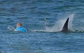 Sốc với clip nhà vô địch thế giới môn lướt ván đánh nhau tay đôi với cá mập