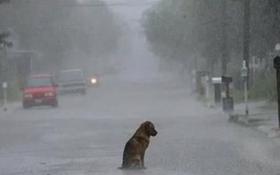 Chú chó trung thành chờ chủ ở nơi bị bỏ rơi suốt 2 năm bất kể mưa nắng