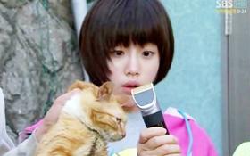 4 phim Hàn bị chỉ trích vì ngược đãi động vật