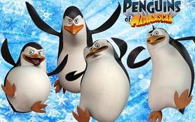 Những bí mật thú vị của dàn cánh cụt ranh mãnh từ Madagascar