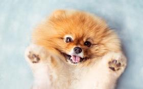 Chùm ảnh về chú chó lông xù siêu đáng yêu làm tan chảy trái tim người khác