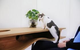 """Chiếc bàn với thiết kế độc đáo làm """"sân chơi"""" dành cho mèo"""