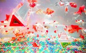 Tròn mắt trước những bể cá vàng nghệ thuật của nghệ nhân Nhật Bản