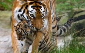 19 bức ảnh thú vị về tình mẫu tử của các loài động vật
