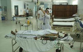 Heo rừng xuống đồng tấn công, nhiều người nhập viện