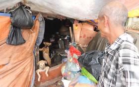 Hà Nội: Cặp vợ chồng sống trong túp lều xập xệ, cưu mang gần 20 con chó