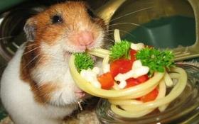 """Chùm ảnh 19 chú chuột Hamster ngộ nghĩnh """"tâm sự"""" về chuyện ăn uống"""