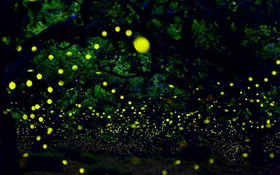 13 hiện tượng ánh sáng kỳ ảo khiến bạn không tin vào mắt mình
