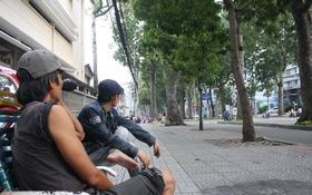 """Ngắm hình ảnh cuối cùng về hàng cây cổ thụ tuyệt đẹp ở Sài Gòn sắp bị """"xóa sổ"""""""