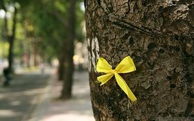 Câu chuyện đẹp về những chiếc nơ vàng gắn trên hàng xà cừ ở đường Tôn Đức Thắng