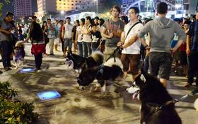 Đường Nguyễn Huệ cấm xe máy, những chú chó nghìn đô theo chủ dạo phố đi bộ