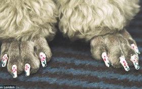 Chó cũng được... làm nail