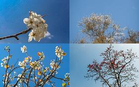 Những sắc hoa bung nở đầy mê hoặc ở nơi đẹp nhất Việt Nam trong mùa xuân