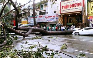 """5 ngày 3 vụ cây đổ đè chết người ở Sài Gòn: Có phải là """"thiên tai bất khả kháng""""?"""