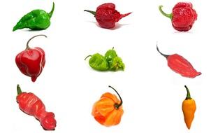 Không nếm mà vẫn biết loại ớt nào cay nhất, bạn quả là người sành ăn