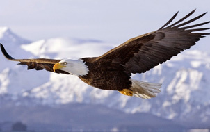 Bạn có biết một con chim có thể bay cao đến mức nào không?