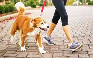 Muốn đưa chó đi dạo nơi công cộng, bạn đừng quên thực hiện những điều này!