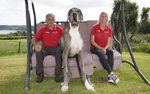 Chân dài tới nách là có thật, em chó cao 2m13 chính là ví dụ điển hình