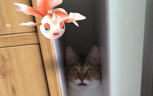 Truyền thuyết ở Nhật kể rằng thú cưng cũng có thể nhìn thấy cả Pokémon